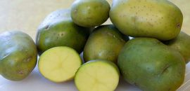 Яд солонин и его свойства: симптомы отравления зеленым картофелем